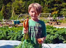 boy-with-carrot