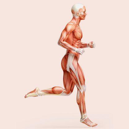 Running Anatomy coaching